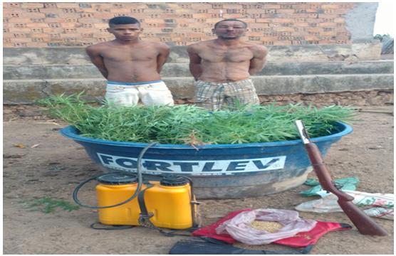 Photo of PM prende plantadores de Maconha no povoado Tubarão-Alcântara