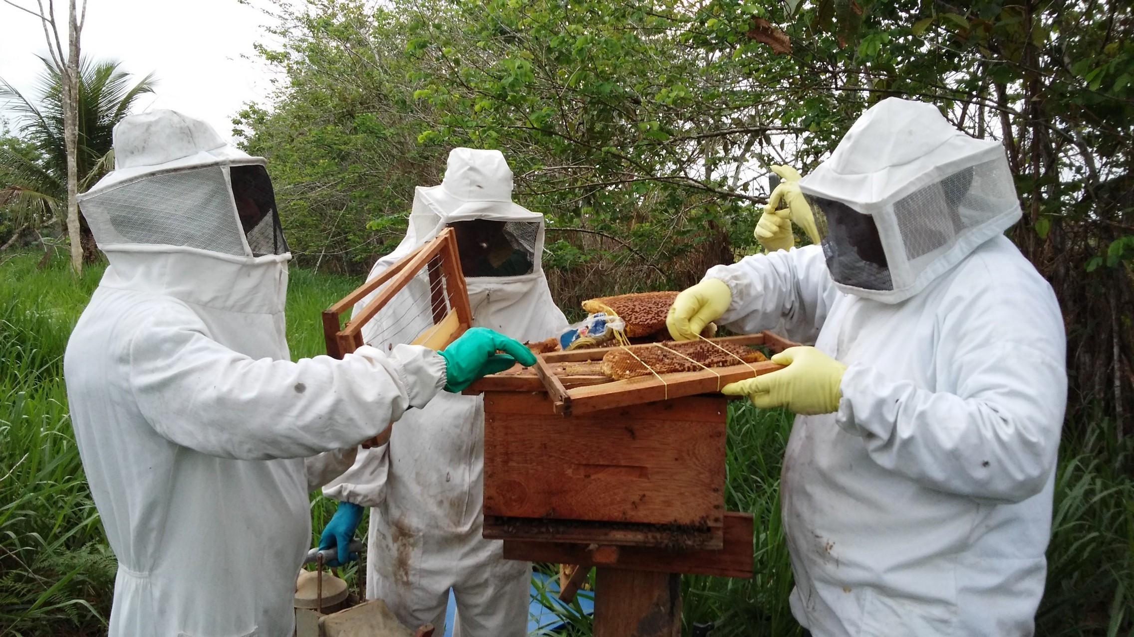 Photo of Prefeitura convoca apicultores e meliponicultores para cadastro em Bequimão-MA